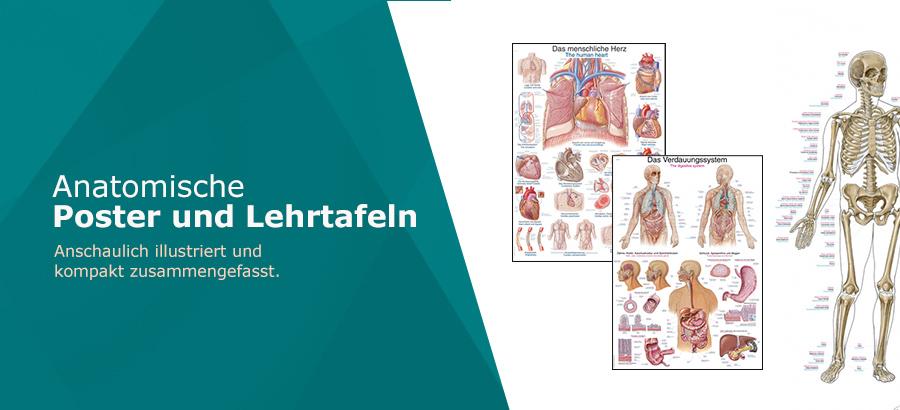 _Anatomische Poster