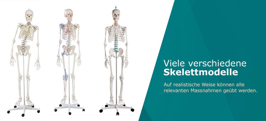 _Skelettmodelle