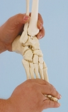 Zusatzausstattung flexibler Fuß, rechts
