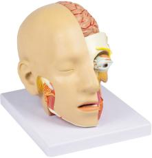 Kopf, zerlegbar, 4 Teile